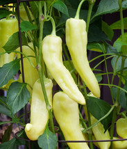 Sweet Banana Pepper Seeds - 100 SEEDS - $11.99