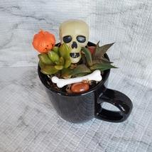 Halloween Planter with Live Succulents, Mug Garden, Skull Halloween fairy garden image 2