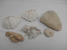 Antique LOT 6 SEASHELLS Sea Shells Ocean Water Decor UNIQUE SHAPES Fossi... - $19.79