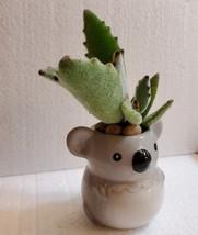 "Succulent in Koala Planter, Panda Plant, 2.5"" ceramic image 6"