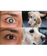 Cataract eye drops 4% NAC. Strongest anywhere.Proven on people & pets. 2... - $58.96