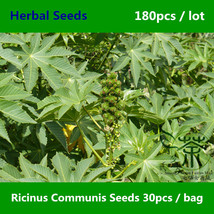 Ricinus Communis Seeds 180pcs, Castor Oil Plant Seeds, Ornamental Plant Bi Ma - $9.98