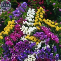 BEST PRICE 30 Seeds Mix Sinuata Pacific Statice Flower,DIY Flower Seeds E4045 DG - $4.99