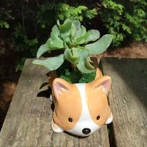 "Corgi Dog Planter with Ripple Jade Succulent, ceramic 5"" Puppy image 5"