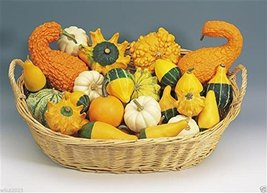 Ornamental Gourd Mix 25 Seeds - Open-Pollinated (Small Mixed) Non-GMO - $3.95
