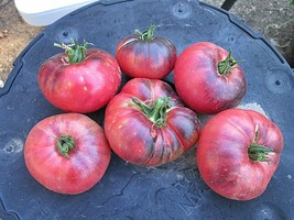 Outdoor Living - 60 Blue Beauty Tomato Seeds Vegetable Seeds - HSG - $19.95