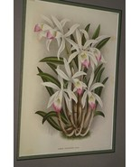 Lindenia Print Limited Edition Laelia Lindleyana Orchid Collectible Art ... - $15.19