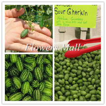 Thumb watermelon seeds 50pcs Mini Small watermelon Vegetable Fruit seeds... - $8.33