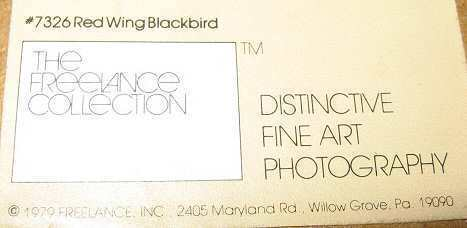 Vintage Photo Guyger Eileen Lynch Red Wing Blackbird