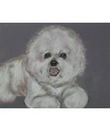 Bichon Frise Dog Art Pastel Drawing Solomon - $90.00