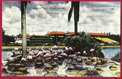 MIAMI FLORIDA Hialeah Park Flamingoes LINEN FL