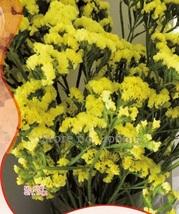 Best Price 35 Seeds Yellow Forget Me Not Flower,Diy Flower Seeds IWSA195 Dg - $5.00
