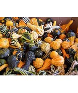 Gourd Seeds Small Mixed Gourd Seeds, 75 seed pack,ORGANIC, USA PRODUCT. ... - $4.46