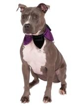 Rubie's Velvet Jester Collar Pet Costume, Medium/Large, Multicolor - $19.65