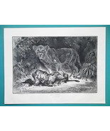 LION Lion Family Cubs Being Fed - 1876 Antique Print - $13.49
