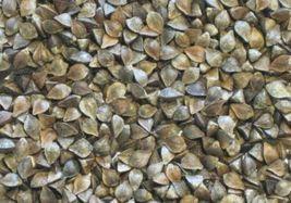 SHIP FROM US 4 Ounces Seeds Organic Buckwheat,DIY Plant Seeds RM - $14.99