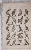 c1795 ORIGINAL PRINT ORNITHOLOGY BIRDS PARROT TOUCAN HORNBILL OWL FALCON - $121.08