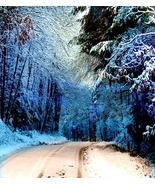 Into Winter, Photo Based Digital Art size 16x20, snow, trees - $45.00