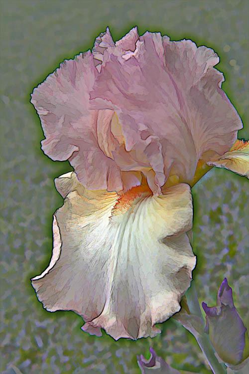 Iris2sized