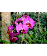 Orchid Rain, Photo Based Digital Art size 11x14, purple, gre - $30.00