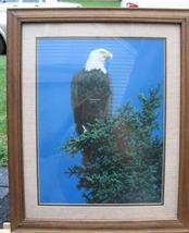 Eagle6 thumb200