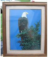 Vintage Bald Eagle Photo Print Glassed Framed Patriotic - $59.99