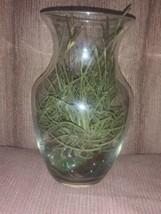 Air Plant Terrarium...Impossible to kill...Ball Moss Tillandsia Recurvata  - $10.00