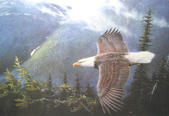 Ronnie Wells Silent Wings Bald Eagle Poster Art Print Signed