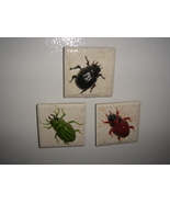 3 Magnets    Assorted Bugs - $9.00