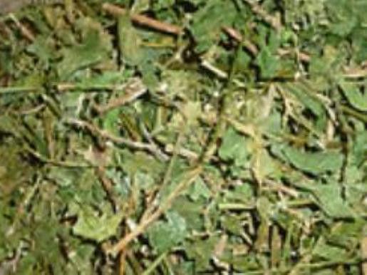 Dried Guinea Hen Weed /Anamu 7x8 bag( Jamaican Grown) image 2