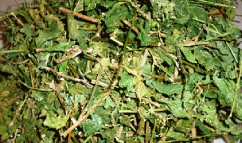 Dried Guinea Hen Weed /Anamu 7x8 bag( Jamaican Grown)