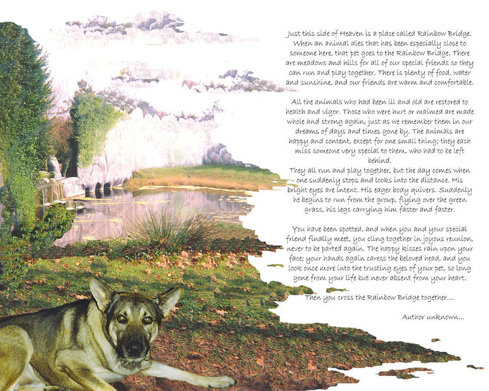 Your  Beloved Pet at the Rainbow Bridge Memorial