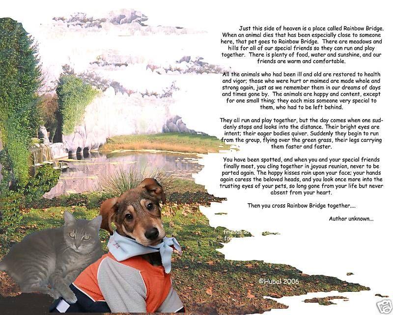 Your  Beloved Pet at the Rainbow Bridge Memorial image 3
