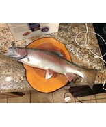 Rainbow Trout Reproduction. Fish Taxidermy.  Art. Trout Fishing.-Broken ... - $69.29