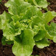 PREMIUM 40Pcs/Bag Italian Lettuce Seeds Green Healthy Vegetable Seeds It... - $4.49