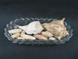 "Vintage Art Glass Bowl 8"" long with Seashells - $20.00"