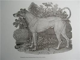 MALE DOG #2 Engraved WOODCUT Print style THOMAS... - $6.00