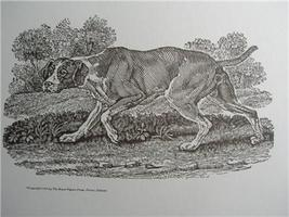 MALE DOG Engraved WOODCUT Print style of THOMAS... - $6.00