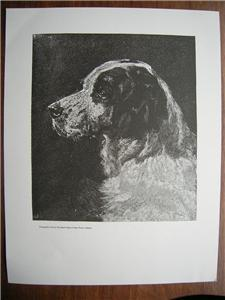 DOG Engraved WOODCUT Print Untitled signed Antique look