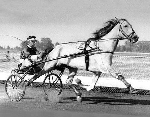 Primary image for DVD - Harness Greats: DAN PATCH/Greyhound/MACK LOBELL/Nevele Pride/SPEEDY CROWN