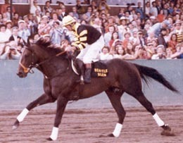 "DVD - SEATTLE SLEW ""Out West"" - LONGACRES Rare PUBLIC APPEARANCE 7/9/77"