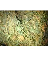 Jamaican Cerasee with vine -(Air dried,Organic & Sprayfree)  __50 lbs - $1,749.99