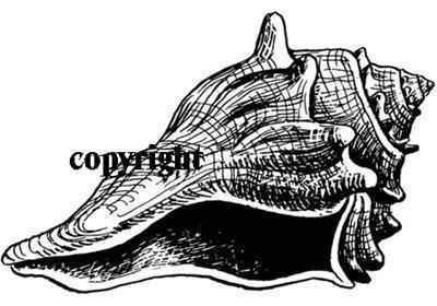 CONCHA SHELL NEW RELEASE NEW mounted rubber stamp