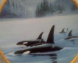 Orcas 1a thumb155 crop