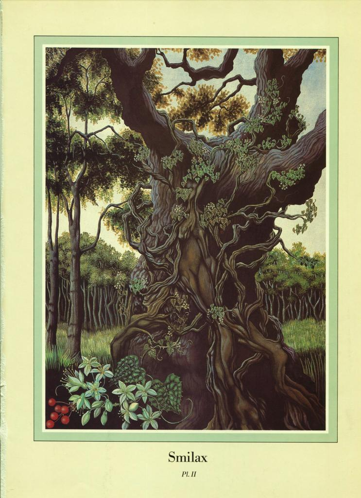"Una Woodruff. ""Smilax"" Vines. 1979 Fantasy Print."