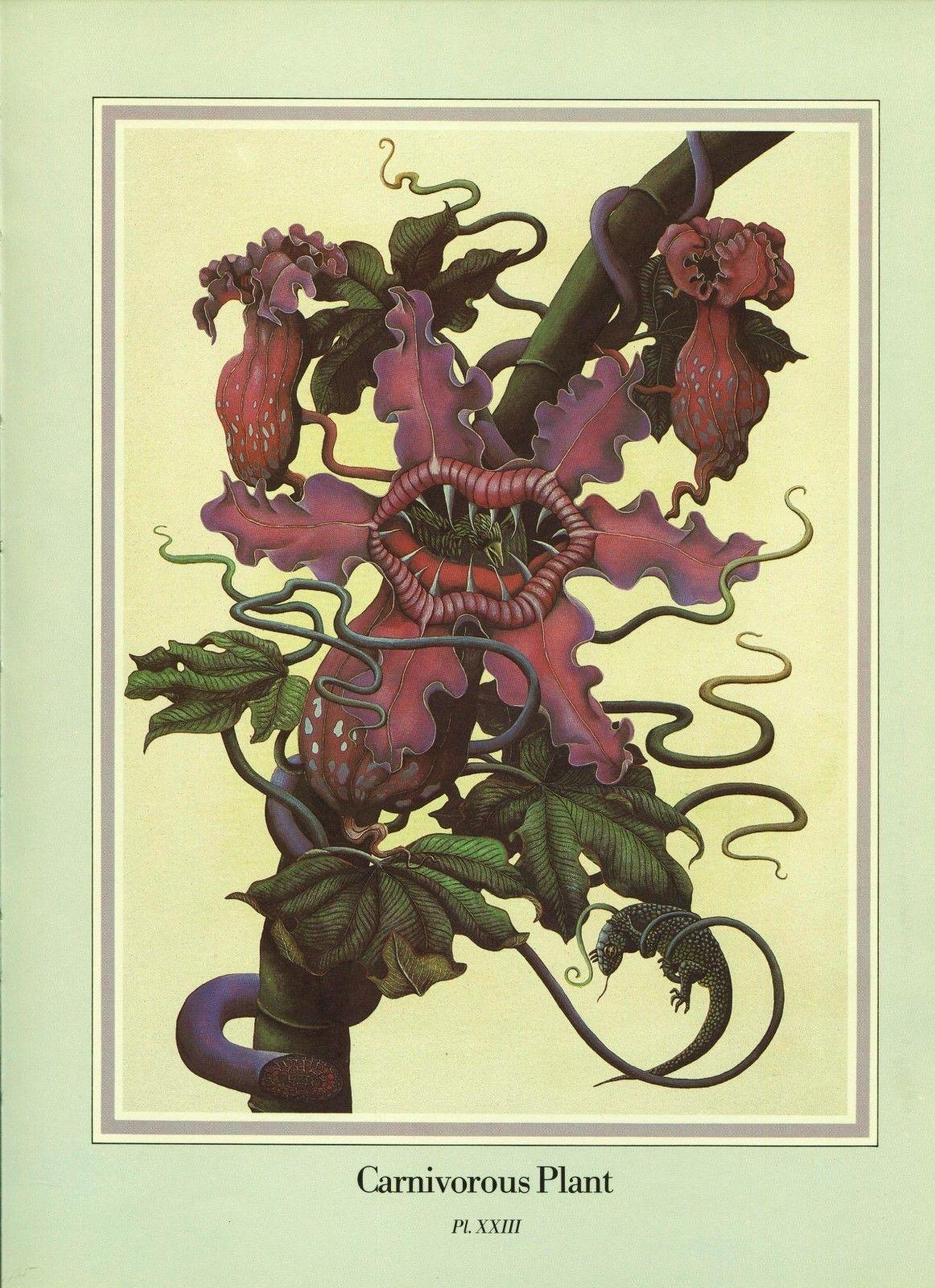 "Una Woodruff. ""Carnivorous Plant"". 1979 Fantasy Print."
