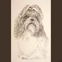 Shih Tzu dog art portrait drawing PRINT 57 Klin... - $60.00