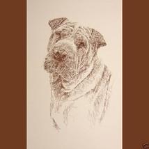 Chinese Shar Pei Dog Art Portrait Print #74 Kli... - $60.00