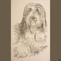 Bearded Collie Dog Art Portrait Print #39 Kline... - $60.00