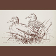 Duck Art Print #20 by Stephen Kline DRAWING FROM WORDS Great Gift MALLAR... - $60.00